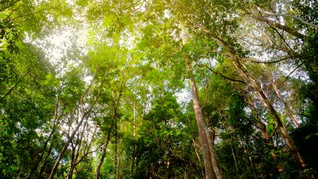 古い苔むした木と死んだ幹 - マレーシア点の映像素材/bロール