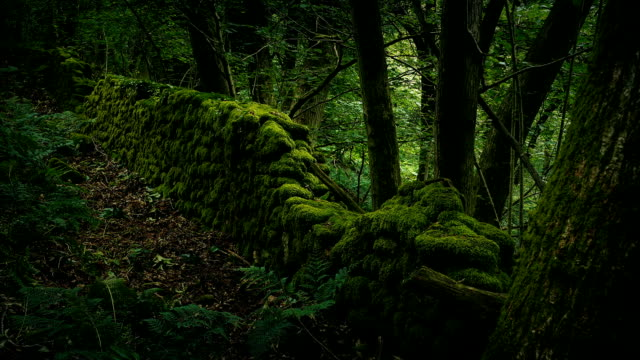 old mossy wall in the forest moving shot - muschio flora video stock e b–roll