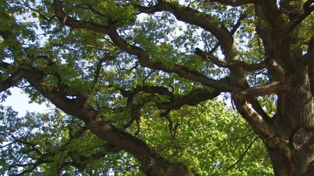 old oak video