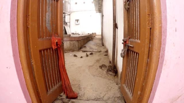gamla öppnade dörrarna många råttor och möss på golvet karni mata temple deshnoke rajasthan - india statue bildbanksvideor och videomaterial från bakom kulisserna