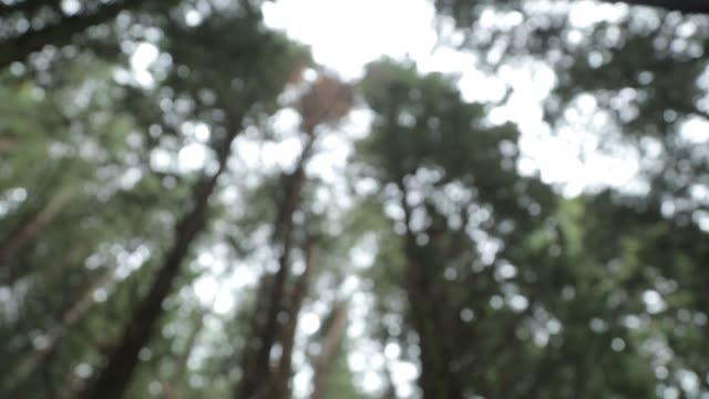 vidéos et rushes de vieux patient une forêt foncée au monténégro. forêt atmosphérique sombre et arbres infectés. - bois texture