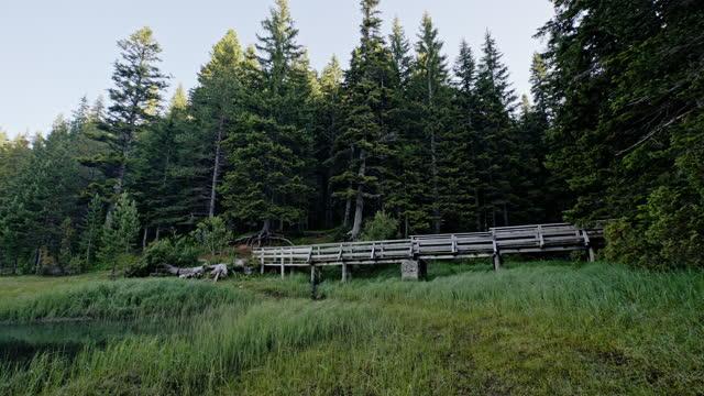 Old rustic wooden bridge in lake shore wetlands