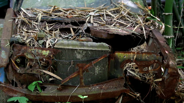 alte rostiges auto abgedeckt mit abgefallenen blättern neben bambus, das dickicht hautnah - baumgruppe stock-videos und b-roll-filmmaterial