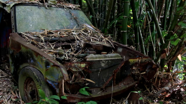 Old rusty car covered with fallen leaves next to bamboo thickets video