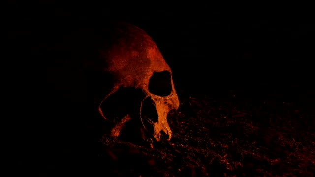 Old Skull On The Ground In Fire Glow Old skull on dirt floor with fire glowing skull stock videos & royalty-free footage