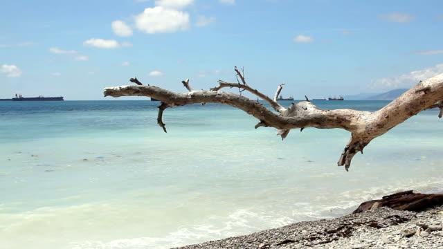 Old snag near coast sea at sunny day. video