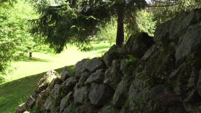 gammal stenmur övervuxen med mossa och ormbunkar i en gammal skuggig skog - stenmur bildbanksvideor och videomaterial från bakom kulisserna