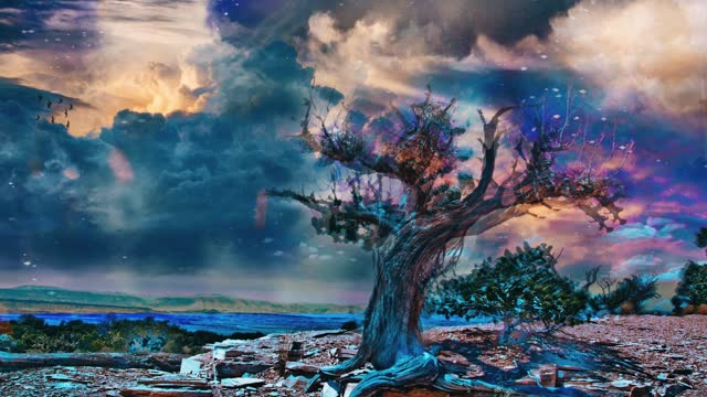 Old tree in arid rocky land