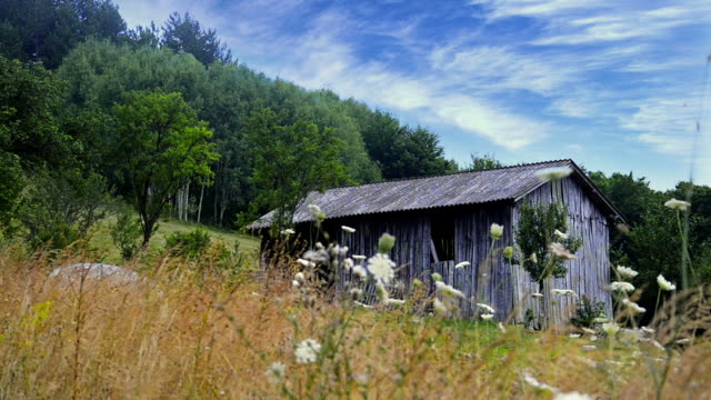 old western shed, barn in mountain meadow, stock video