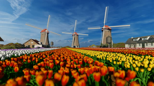 Old windmill and colorful tulips on a Dutch village