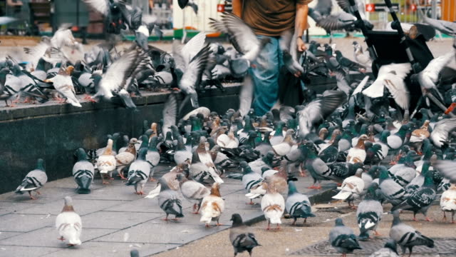 Old Woman Feeding Pigeons on the Street in Slow Motion video