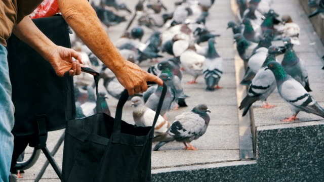 Old Woman is Feeding Pigeons on the Street video