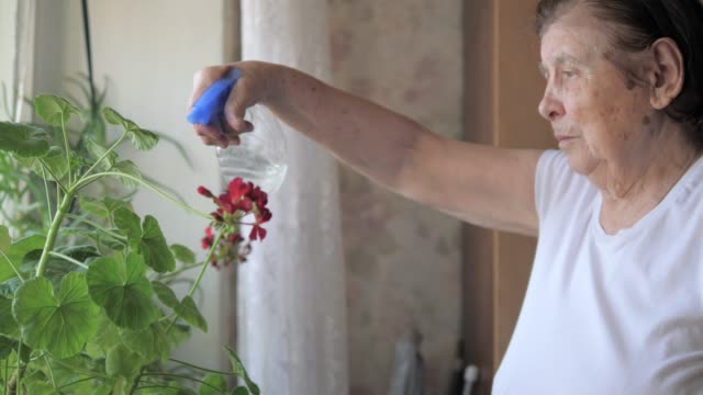 Old Woman Sick With Parkinson's Sprayed Water With Flowers In The House An old woman sick with Parkinson's sprayed with water from the sprayer flowers in the house on the windowsill. She shakes, her hands tremble, and the movements are like a robot. 4k, 3840x2160 shivering stock videos & royalty-free footage