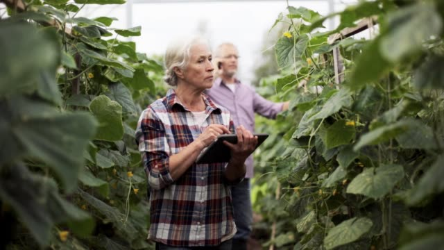 old woman with tablet pc in greenhouse on farm