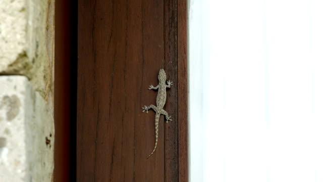 old wood door with gecko