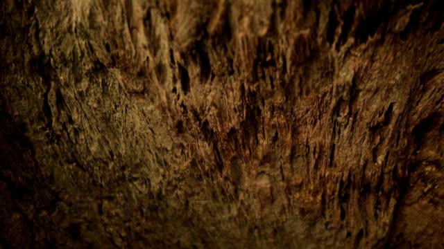 vídeos y material grabado en eventos de stock de texturados de madera vieja - diseño natural