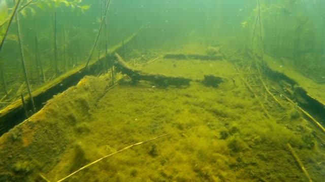 Old wooden boat sunken ashore, close up video