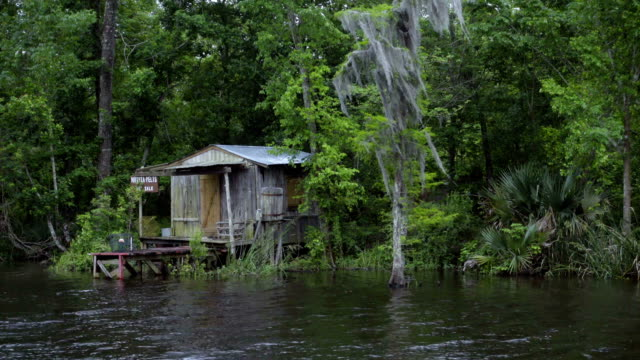 Old wooden hut in the swamp area of Louisiana video