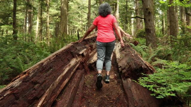 SLO MO Older couple walking through a fallen log video