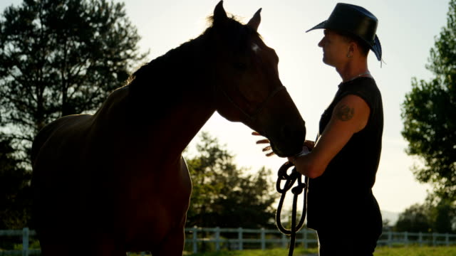 Slow Motion Older Rider Petting Beautiful Strong Dark Brown Horse On Sunny Day Video