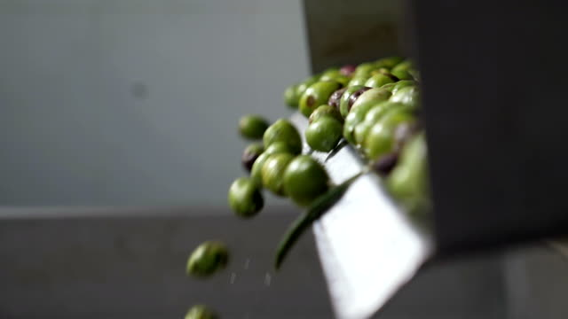 olive industry- oil production- olives falling - oliva video stock e b–roll