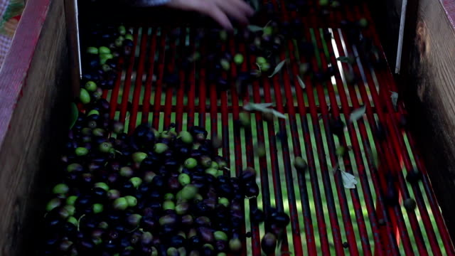 Olive processing on truck video