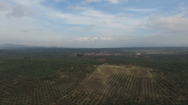 olive tree  drone olive, tree, drone, air olives stock videos & royalty-free footage