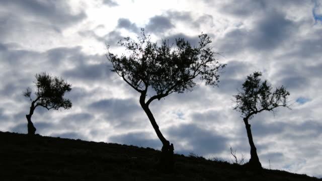 olives tree on a cloudy day timelapse. - jesus christ filmów i materiałów b-roll