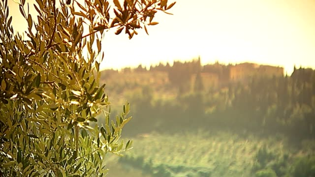 Olvies and Landscape video