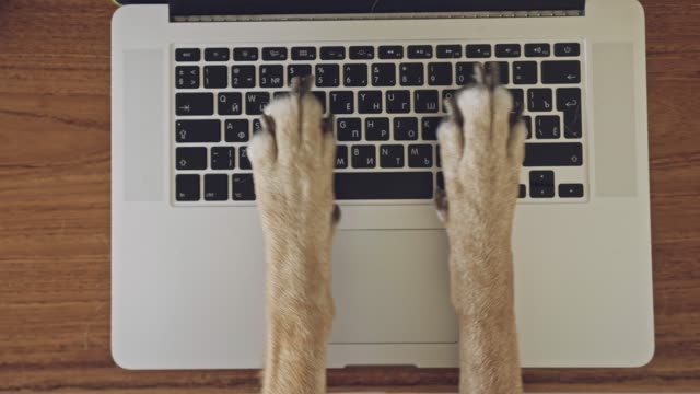Video Сomical and silly playful video of dog paws typing and pressing buttons on laptop keyboard nervously and rapidly. Сoncept joke or freelance work in the office, pet life and routine workplace