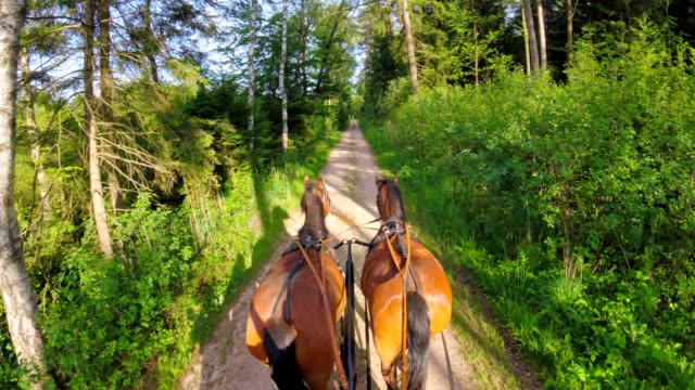 POV: on a horse-drawn carriage