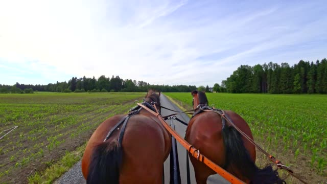pov: on a horse-drawn carriage - cocchio video stock e b–roll