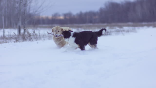 On a Winter Walk video