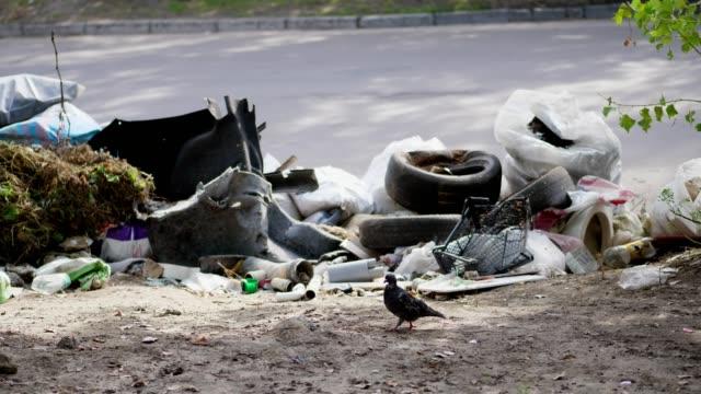 vídeos y material grabado en eventos de stock de en terreno, a lado de carretera, un montón de basura es mentira. dispersa la basura, basura, cosas viejas, neumáticos coche, roto el vidrio, plástico. botadero de basura. ecología, contaminación del medio ambiente - animal joven