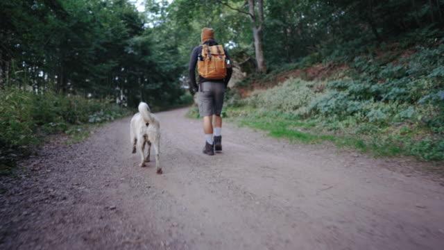 på vandring med sin hund - hund skog bildbanksvideor och videomaterial från bakom kulisserna
