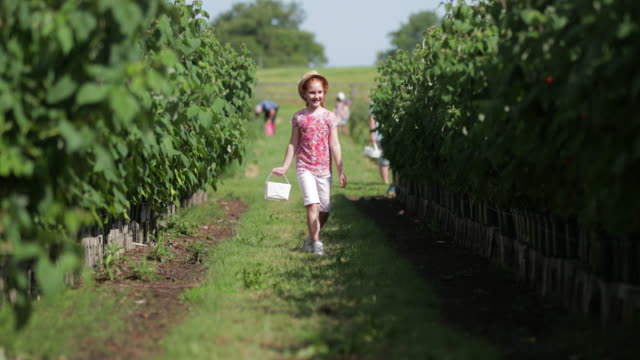 On Route to Pick Strawberries Young girl walking through a strawberry field between strawberry bushes. small business saturday stock videos & royalty-free footage