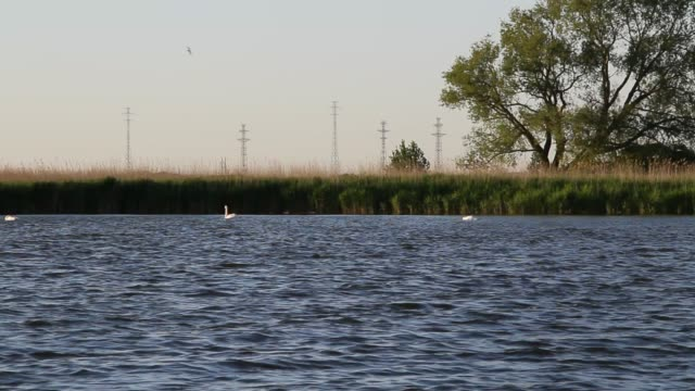 on the Bay on the Bay in early summer water bird stock videos & royalty-free footage