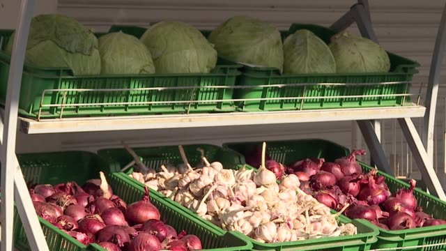 on the counter are fresh vegetables: red onions, garlic and white cabbage. - crucifere brassicali video stock e b–roll