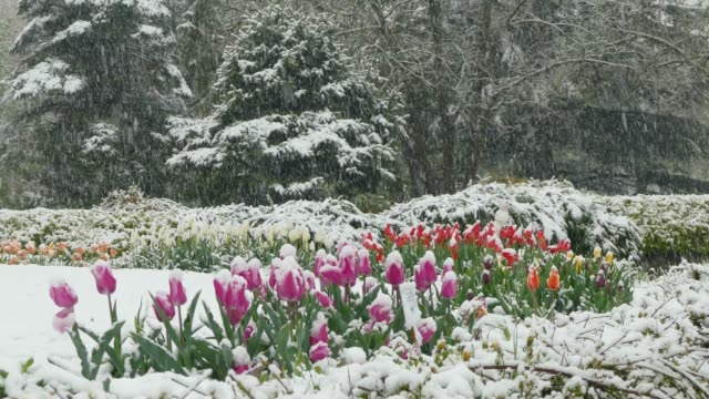 On the flower clearing in the park it's snowing video