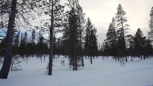 on the husky sledge - cane husky video stock e b–roll