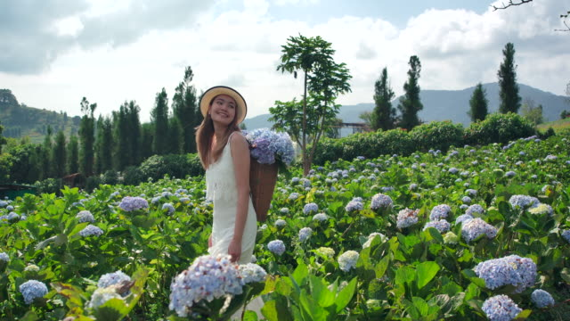 On the Moutain Thai beautiful woman the tourist She traveled to the hydrangea field. Fresh air And she is happy