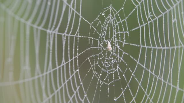 på webben hängande droppar av dagg. - spindelväv bildbanksvideor och videomaterial från bakom kulisserna
