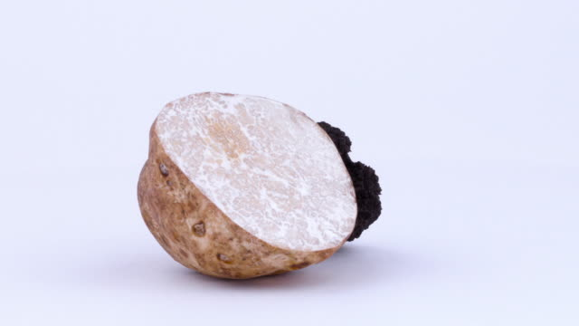 one half of a white truffle and one half of a black truffle. rotating on the on the turntable. isolated on the white background. closeup. macro. - alta moda italy video stock e b–roll