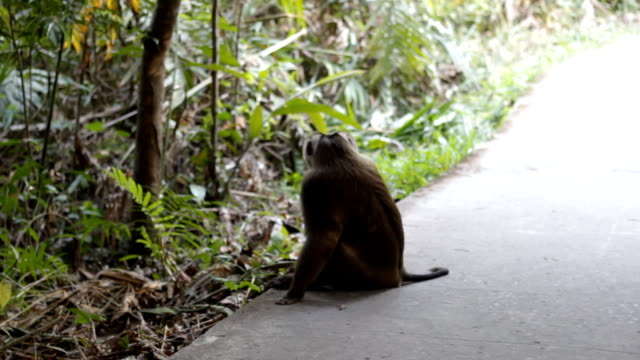one monkey in the wild video