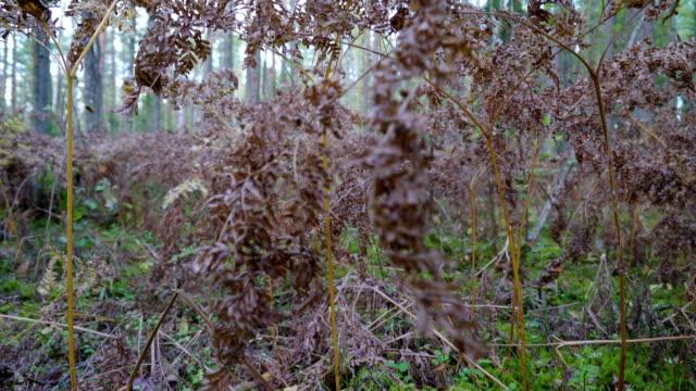 en av de många växter som finns inne i naturreservatet piusa - fur bildbanksvideor och videomaterial från bakom kulisserna