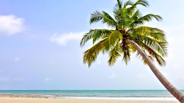 one palm 海のビーチ - ヤシの木点の映像素材/bロール