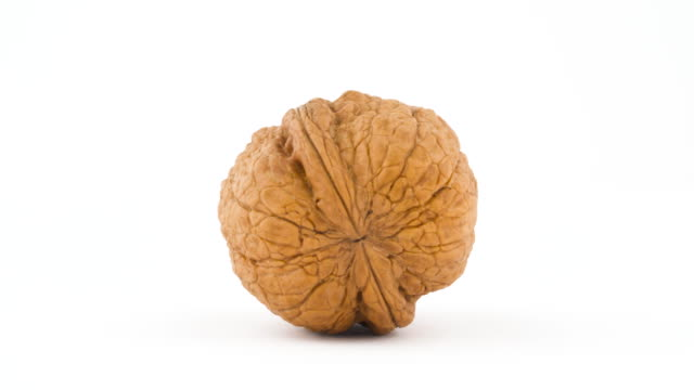 One walnut in a shell. Rotating on the turntable isolated on the white background. Close up. Macro.