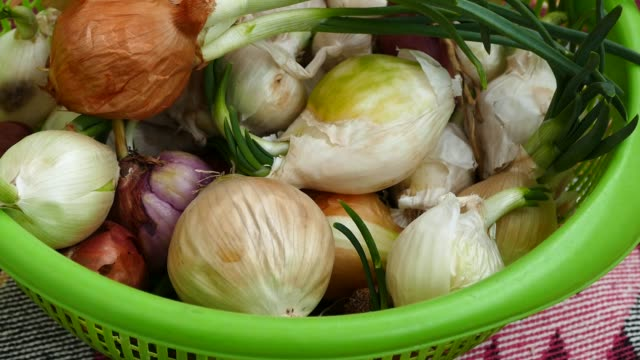 onions germinated and green in the home, onions in the kitchen, - alliacee video stock e b–roll