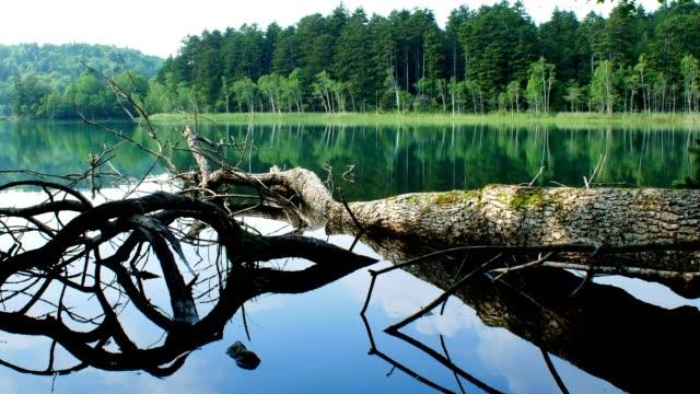 onneto, akan nationalpark, hokkaido, japan - akan nationalpark bildbanksvideor och videomaterial från bakom kulisserna