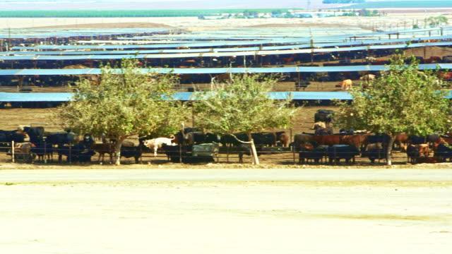 Open-Air-Fleisch-Farm in der Nähe von Coalinga, Kalifornien, USA – Video